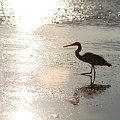 Paradise Silhouette  by J Darrell Hutto