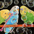 Parakeet Bubbles by Mary Hughes