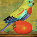 Parakeet On A Persimmon by Leah Saulnier The Painting Maniac