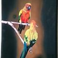 Parakeet  by Suresh Nair