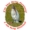 Paranoid Woodstork by John M Bailey