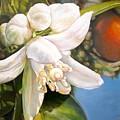 Parfum D by Muriel Dolemieux