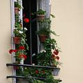 Paris - Window 2 by Jennifer McDuffie
