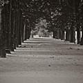 Paris, Sunday Morning by Michael Ziegler