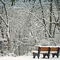 Park Bench Along The Pike River by Kay Novy