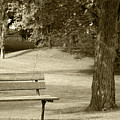 Park Bench In A Park by Robert Hamm