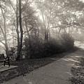 Park Bench Path With Foggy Sunbeams Winona Minnesota by Kari Yearous