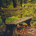 Park Bench by Shane Holsclaw