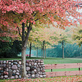 Park In Autumn/fall Colors by Maxwell Dziku