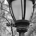 Park Light by Sandy Taylor