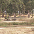 Park Near The Source Of The Yarkon River by Adam Gladstone