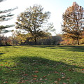 Park Seen by David King