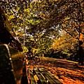 Park Side  by Robert Villano