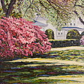 Park Spring Blossom With Shadows by Richard Nowak