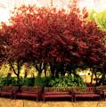 Park by Svetlana Sewell