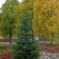 Park Trees by Esko Lindell