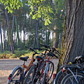 Parked Mountain Bikes Leaning Against A Tree Trunk by Sami Sarkis