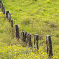 Parker Ranch Fence by Carl Shaneff - Printscapes