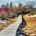 Parker River Nwr Boardwalk by Dave Thompsen