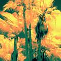 Parking Lot Palms 1 3 by Gary Bartoloni