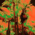 Parking Lot Palms 1 6 by Gary Bartoloni