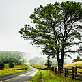 Parkway Mist by Dale R Carlson
