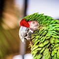 Parrot 2 by Hyuntae Kim