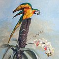 Parrot And Orchid by Diane Rose Medlin