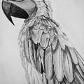 Parrot by Anirudh Maheshwari