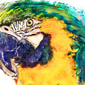 Parrot Ara Watercolor Painting by Justyna JBJart