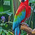 Parrot by Dawn Harris