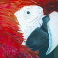 Parrot by Deena Greenberg