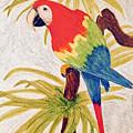 Parrot by Donald Paczynski
