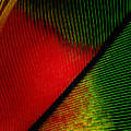 Parrot Feather Macro by Robert Storost