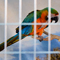 Parrot In A Cage by Jeelan Clark