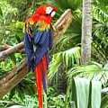 Parrot In Tropical Setting by Sharon Minish