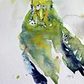 Parrot by Kovacs Anna Brigitta