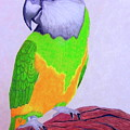 Parrot Portrait by Maureen Beaudet