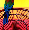 Parrot Sitting On Chair by Garry Gay