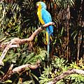 Parrot by Steve Karol