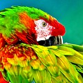 Parrot Time 2 by Lisa Renee Ludlum