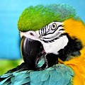 Parrot Time 3 by Lisa Renee Ludlum