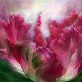Parrot Tulip 2 by Carol Cavalaris