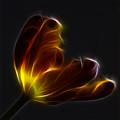 Parrot Tulip Abstract by Robert Ullmann