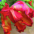 Parrot Tulip by Kathy Moll