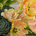 Parrot Tulips And Desert Succulents by Stephen Settles
