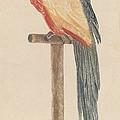 Parrot by Workshop Of Johann Teyler