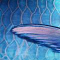 Parrotfish Scales by Ed Robinson - Printscapes