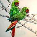 Parrots by Sonya Catania