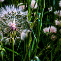 Partial Wish by Angus Hooper Iii